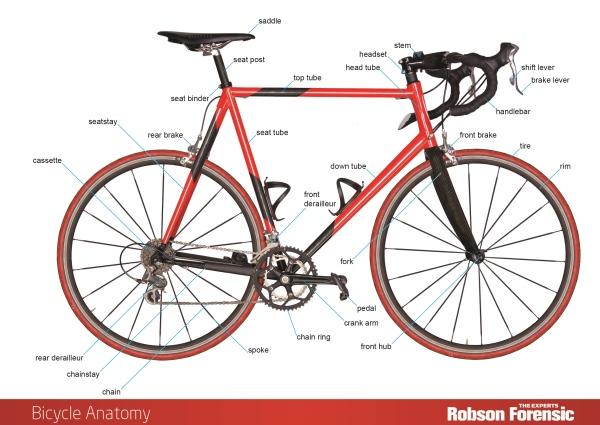 Surprising Bicycle Anatomy Expert Diagram Robson Forensic Wiring Digital Resources Funiwoestevosnl