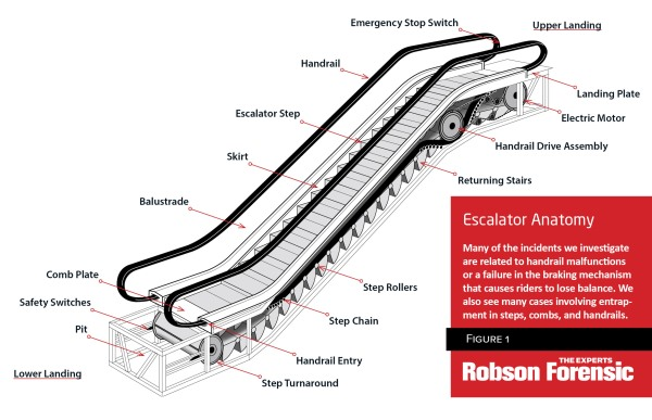 Escalator Anatomy Expert Diagram To Ist In Forensic